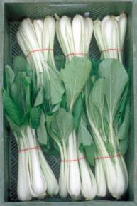 Pak Choi<br>&quot;White Celary Mustard&quot;