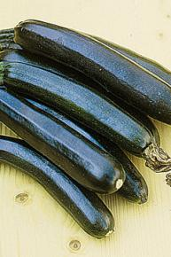 Zucchini<br>&quot;Black Beauty&quot;