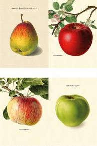 An Apple a Day 2018 ? Postkartenset