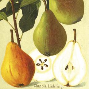 Clapps Liebling