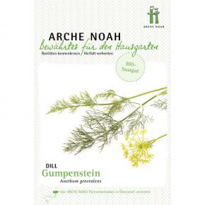 Dill<br>&quot;Gumpenstein&quot;<br>(Anethum graveolens)