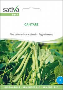 Buschbohne<br>&quot;Cantare&quot;