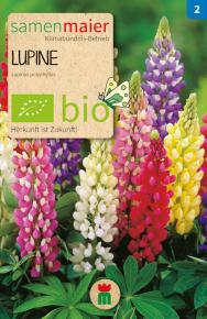 Lupine<br>Mischung<br>(Lupinus polyphyllus)