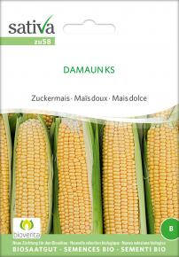 Zuckermais<br>&quot;Damaun KS&quot;
